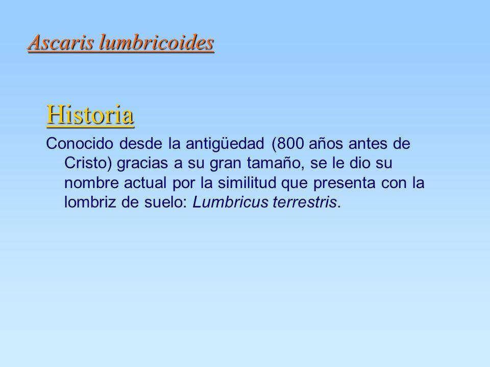 Historia Ascaris lumbricoides