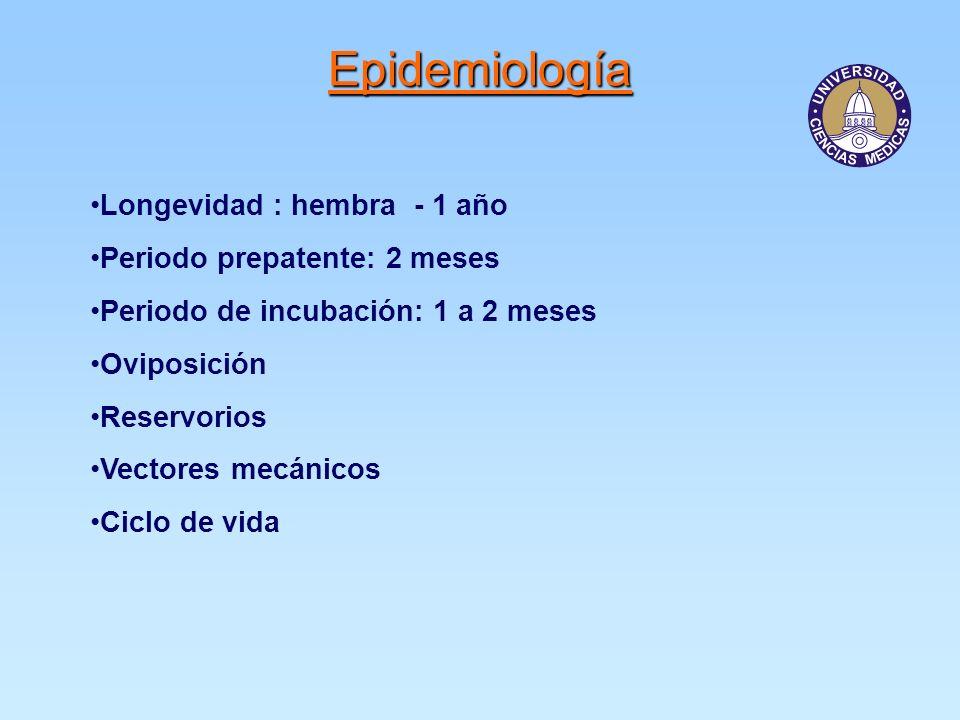 Epidemiología Longevidad : hembra - 1 año Periodo prepatente: 2 meses