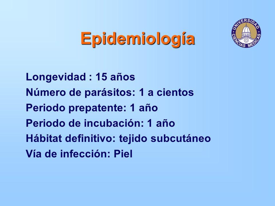 Epidemiología Longevidad : 15 años Número de parásitos: 1 a cientos