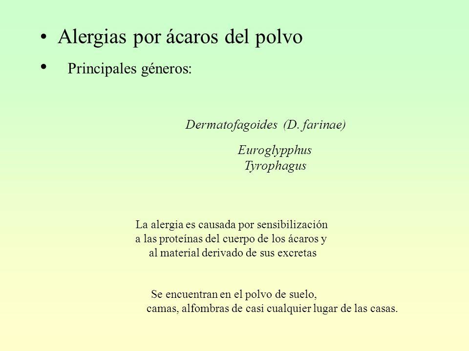 Alergias por ácaros del polvo Principales géneros: