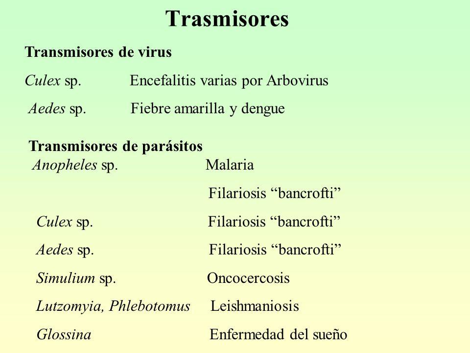 Trasmisores Transmisores de virus