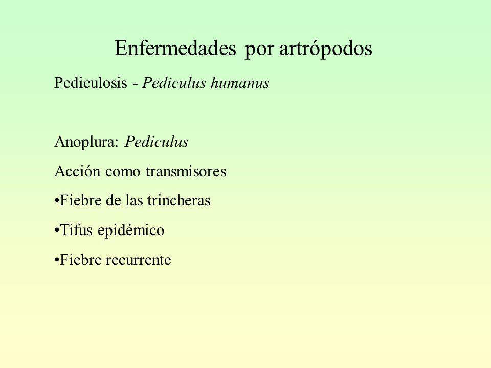Enfermedades por artrópodos