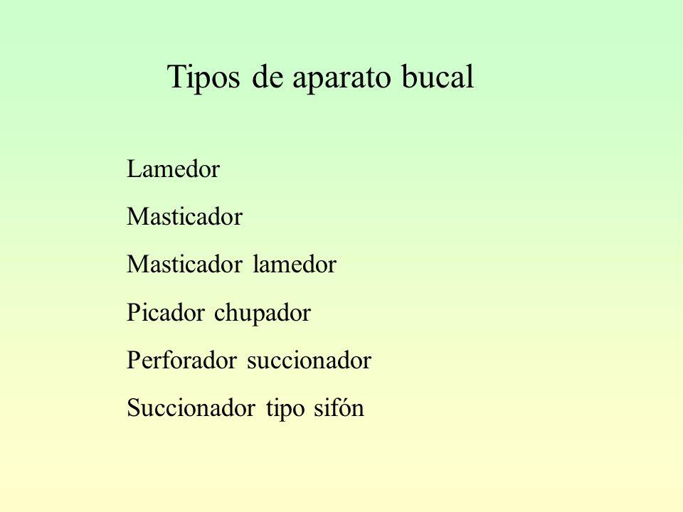 Tipos de aparato bucal Lamedor Masticador Masticador lamedor