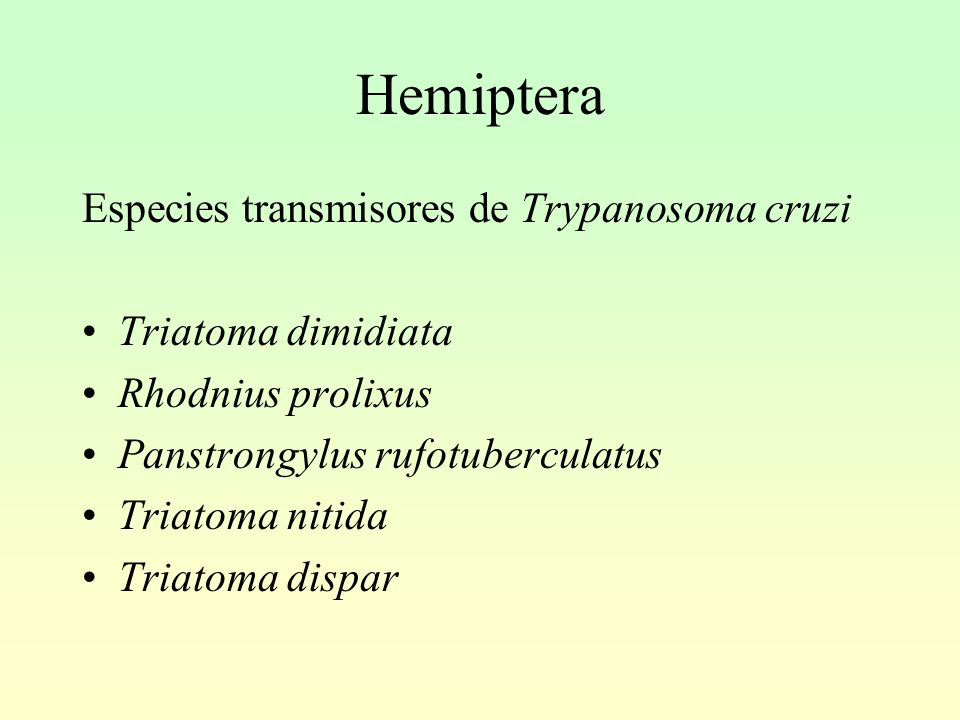 Hemiptera Especies transmisores de Trypanosoma cruzi