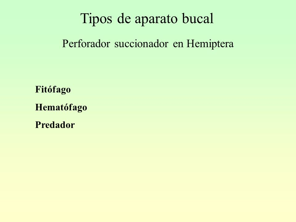 Tipos de aparato bucal Perforador succionador en Hemiptera Fitófago