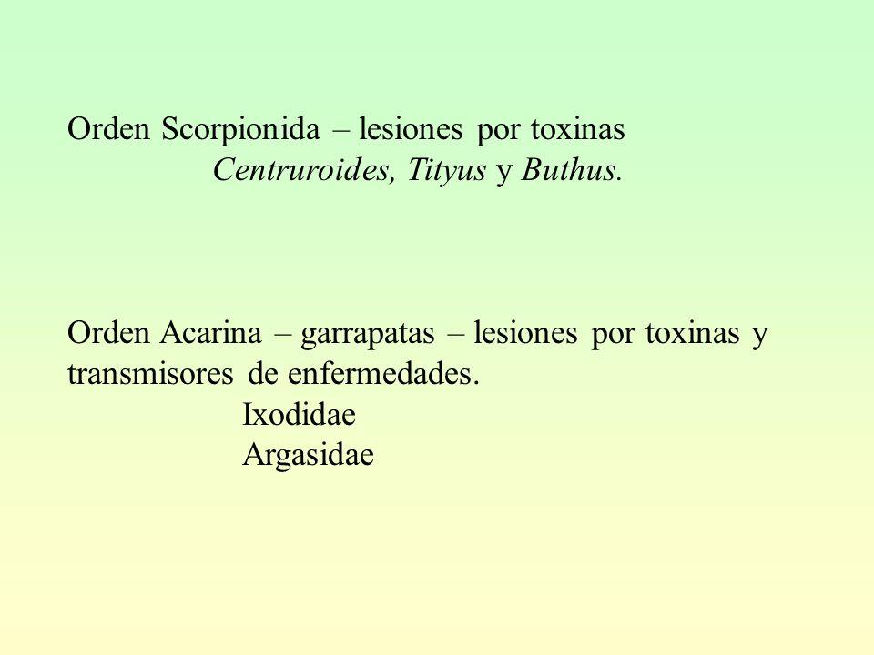 Orden Scorpionida – lesiones por toxinas