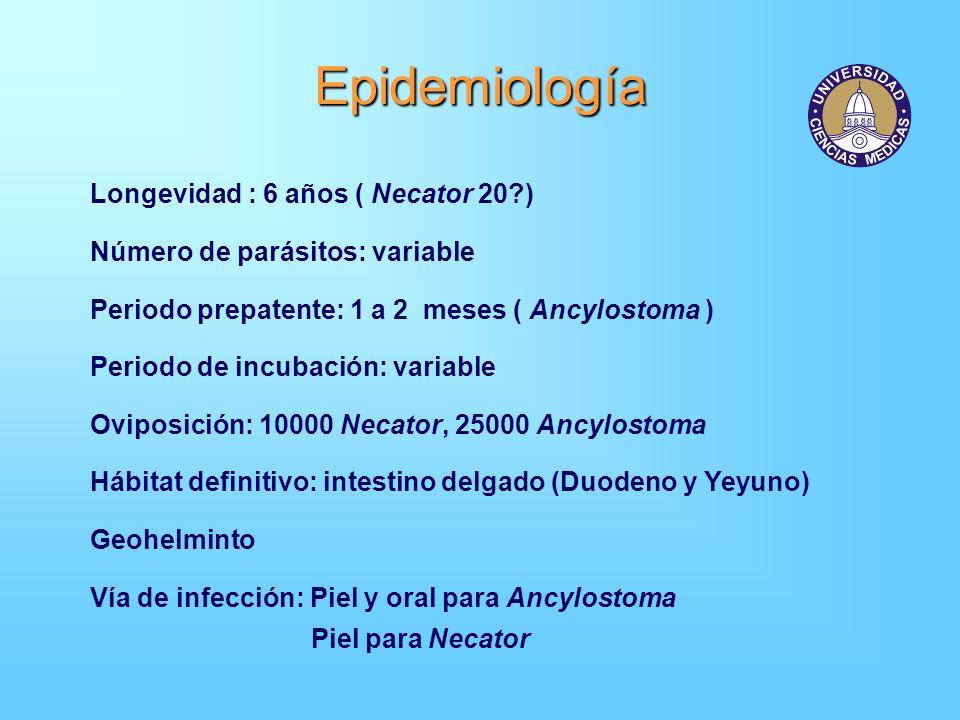 Epidemiología Longevidad : 6 años ( Necator 20 )