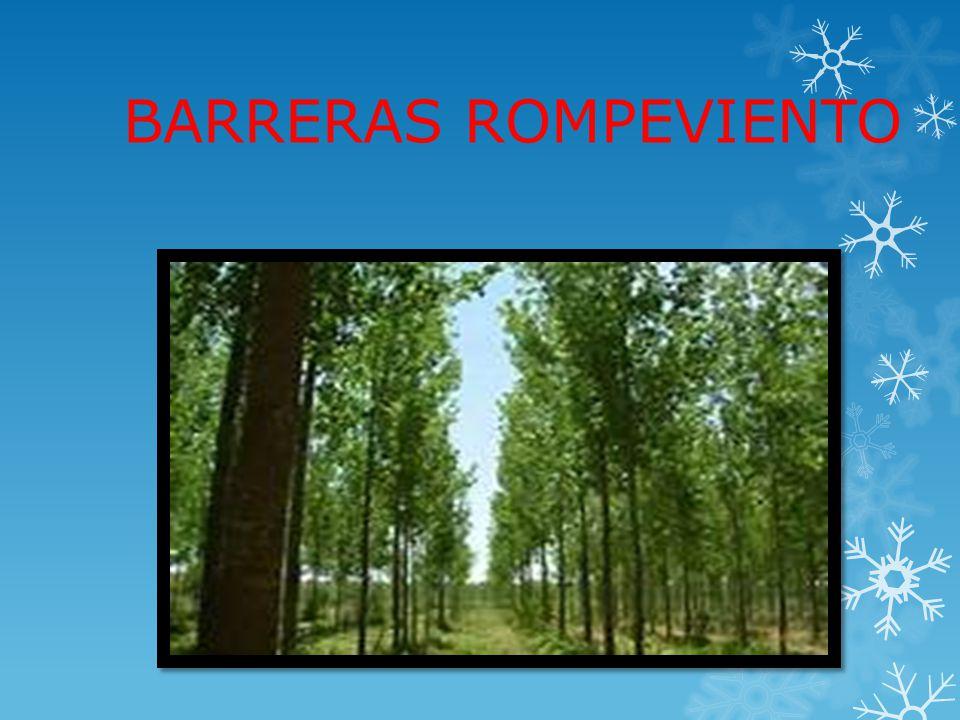 BARRERAS ROMPEVIENTO