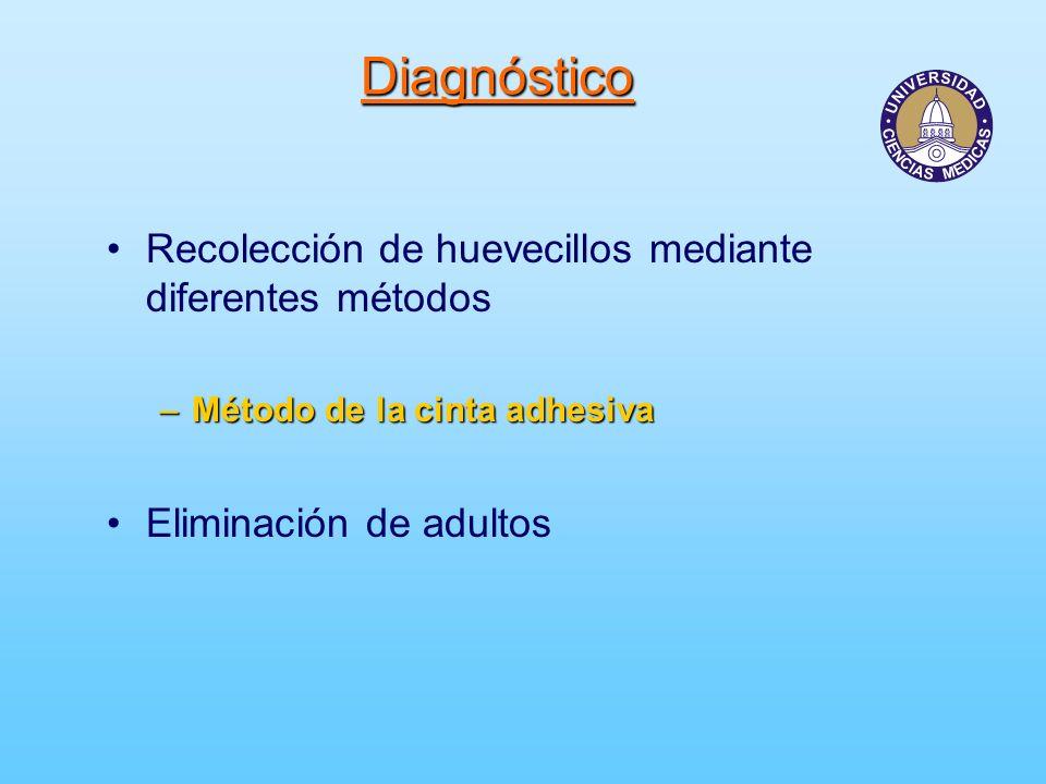 Diagnóstico Recolección de huevecillos mediante diferentes métodos
