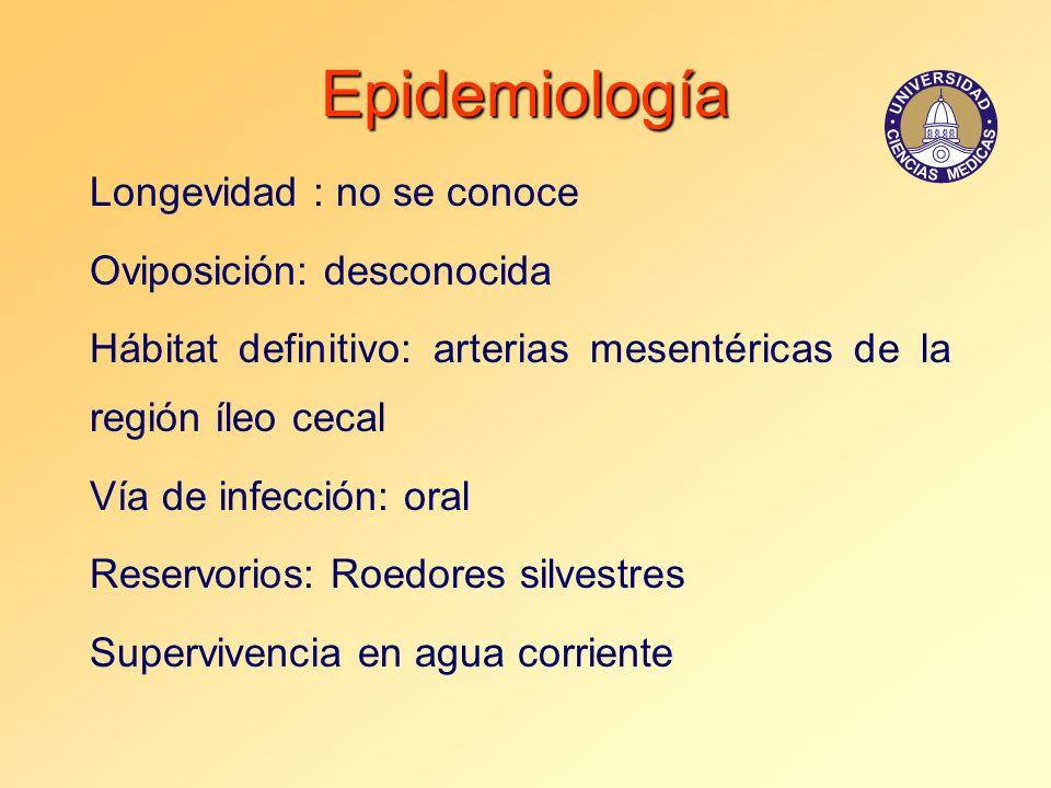 Epidemiología Longevidad : no se conoce Oviposición: desconocida
