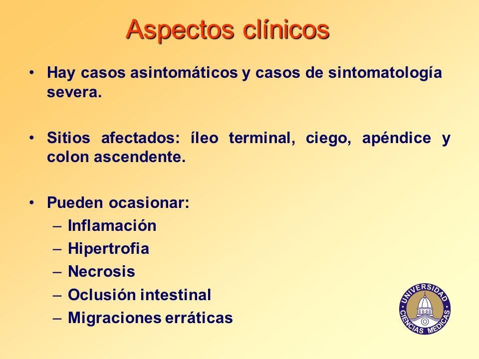 Aspectos clínicos Hay casos asintomáticos y casos de sintomatología severa. Sitios afectados: íleo terminal, ciego, apéndice y colon ascendente.