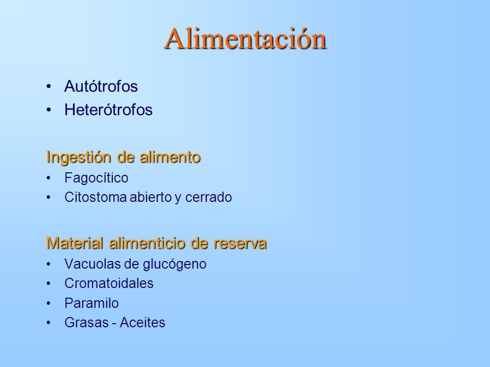 Alimentación Autótrofos Heterótrofos Ingestión de alimento