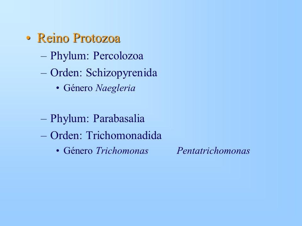 Reino Protozoa Phylum: Percolozoa Orden: Schizopyrenida