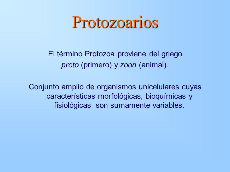 Protozoarios El término Protozoa proviene del griego