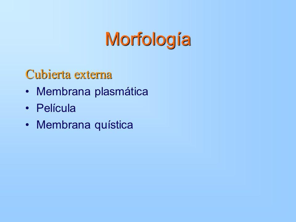 Morfología Cubierta externa Membrana plasmática Película
