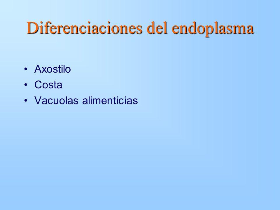 Diferenciaciones del endoplasma