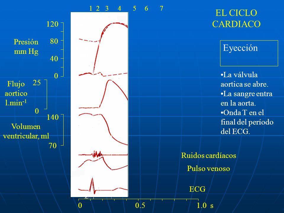 EL CICLO CARDIACO Eyección 120 80 Presión 40 mm Hg