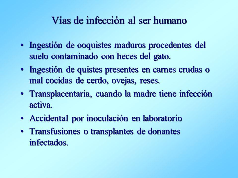 Vías de infección al ser humano