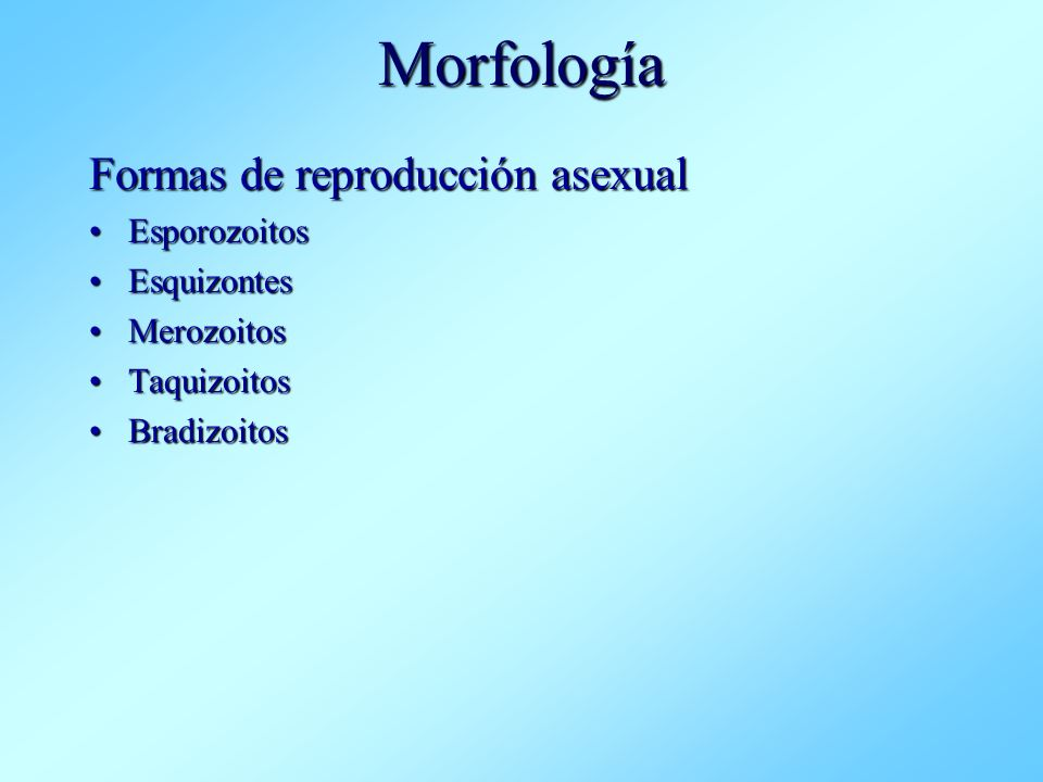 Morfología Formas de reproducción asexual Esporozoitos Esquizontes