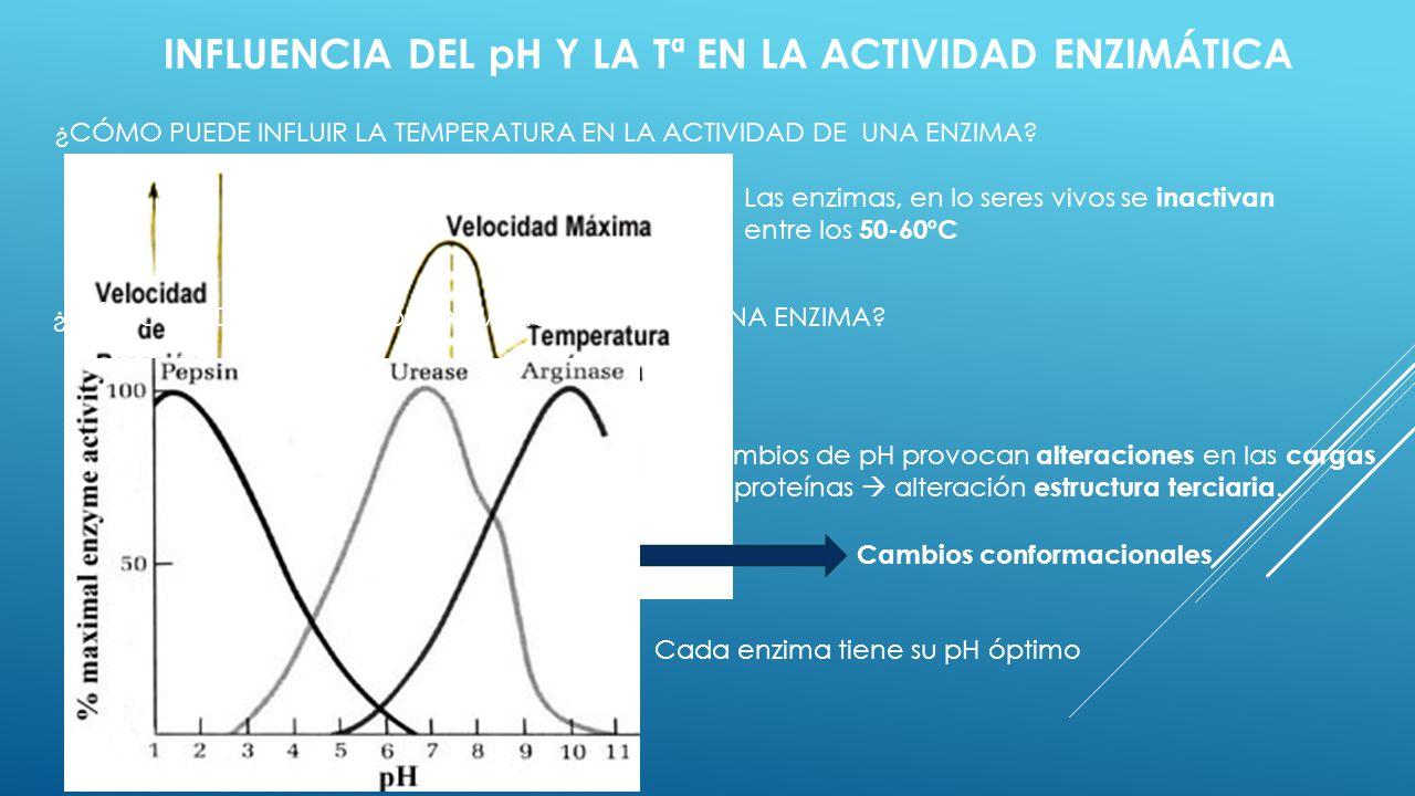 INFLUENCIA DEL pH Y LA Tª EN LA ACTIVIDAD ENZIMÁTICA