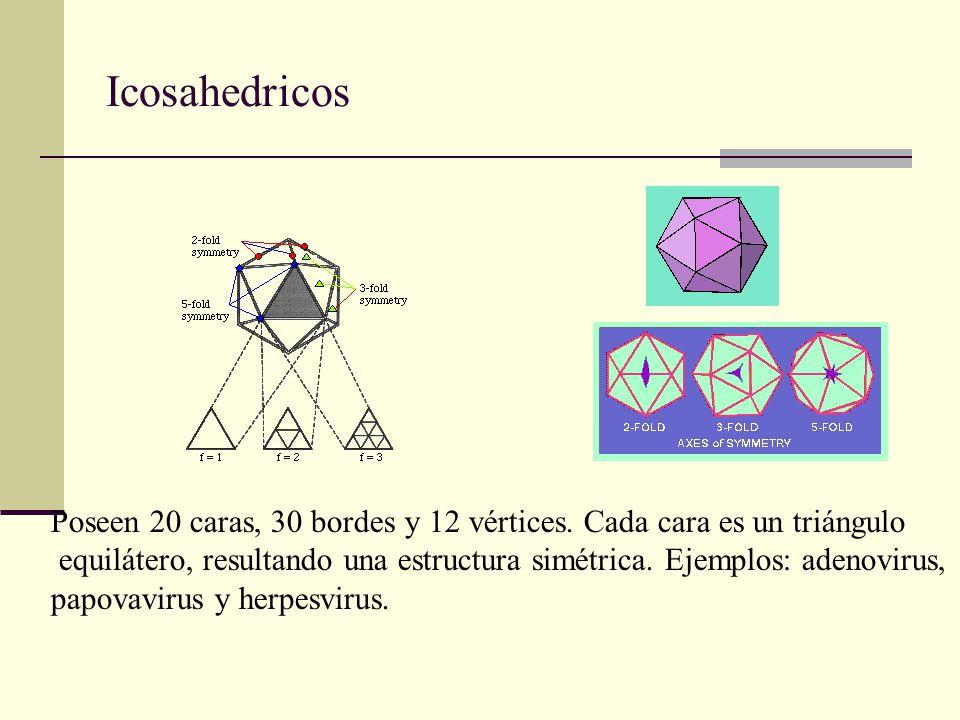 Icosahedricos Poseen 20 caras, 30 bordes y 12 vértices. Cada cara es un triángulo.