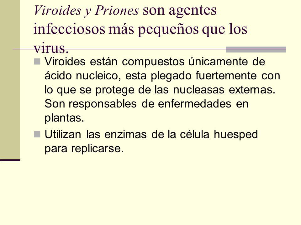 Viroides y Priones son agentes infecciosos más pequeños que los virus.