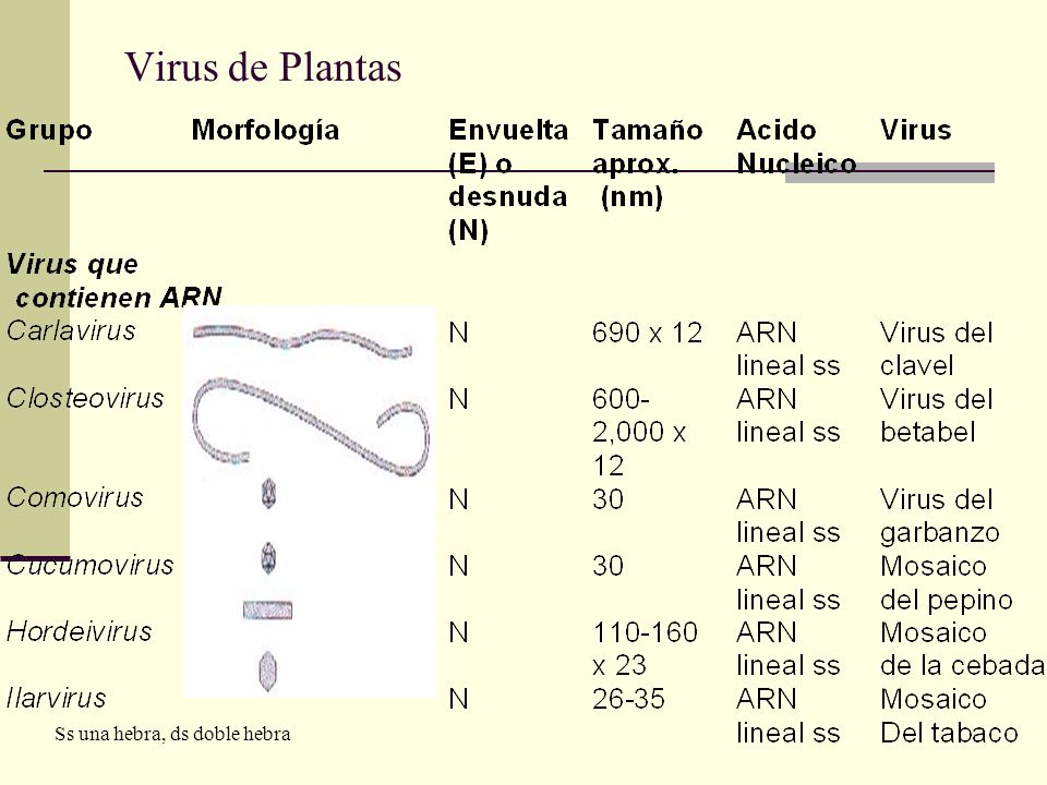 Virus de Plantas Ss una hebra, ds doble hebra