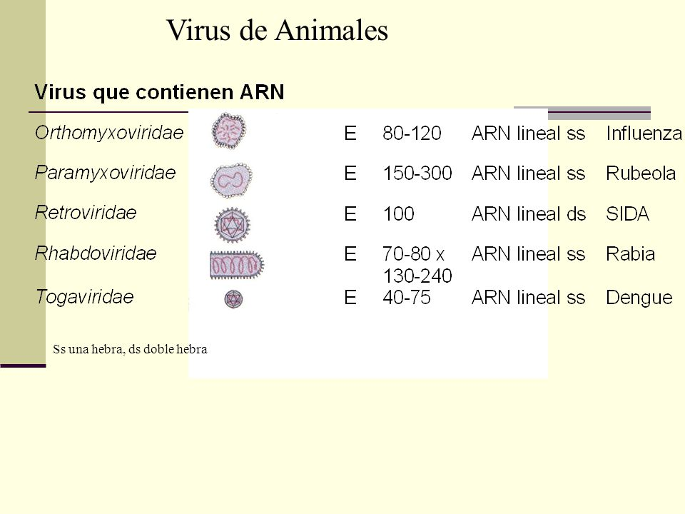 Virus de Animales Ss una hebra, ds doble hebra