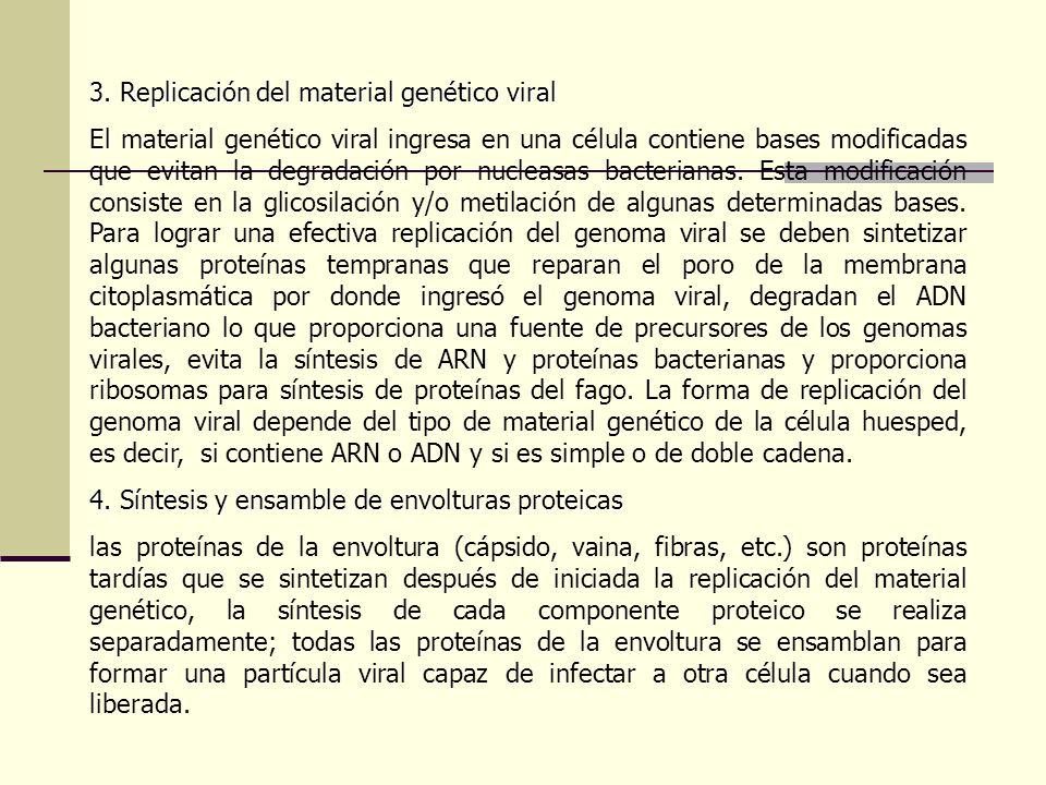 3. Replicación del material genético viral