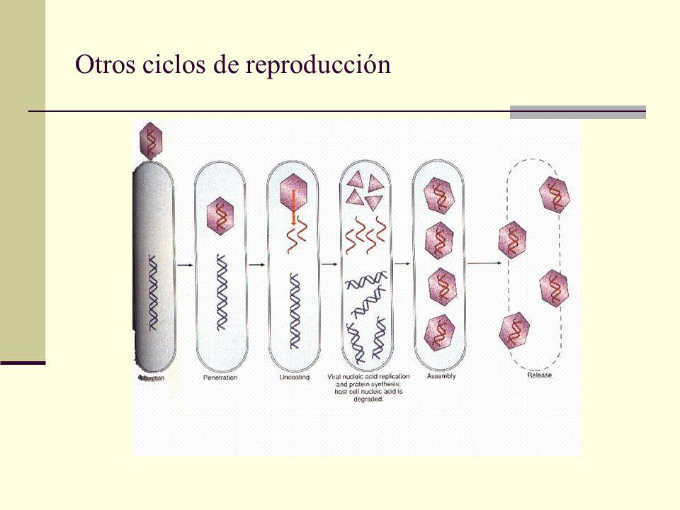 Otros ciclos de reproducción