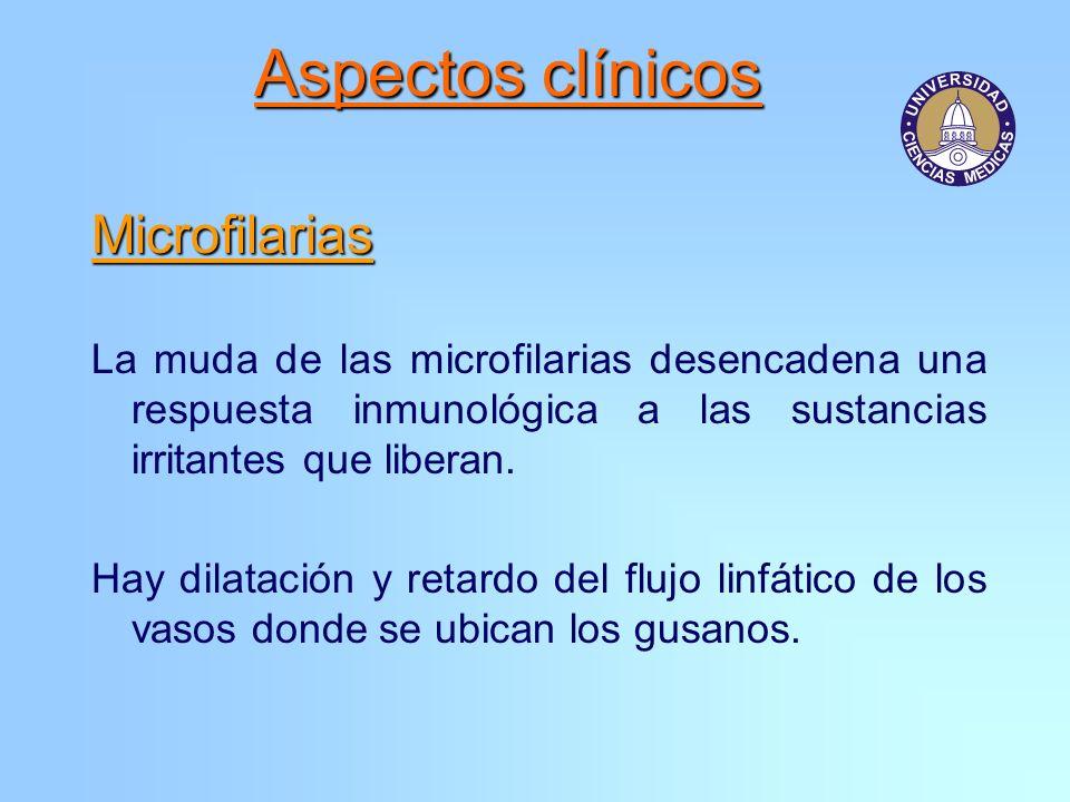Aspectos clínicos Microfilarias