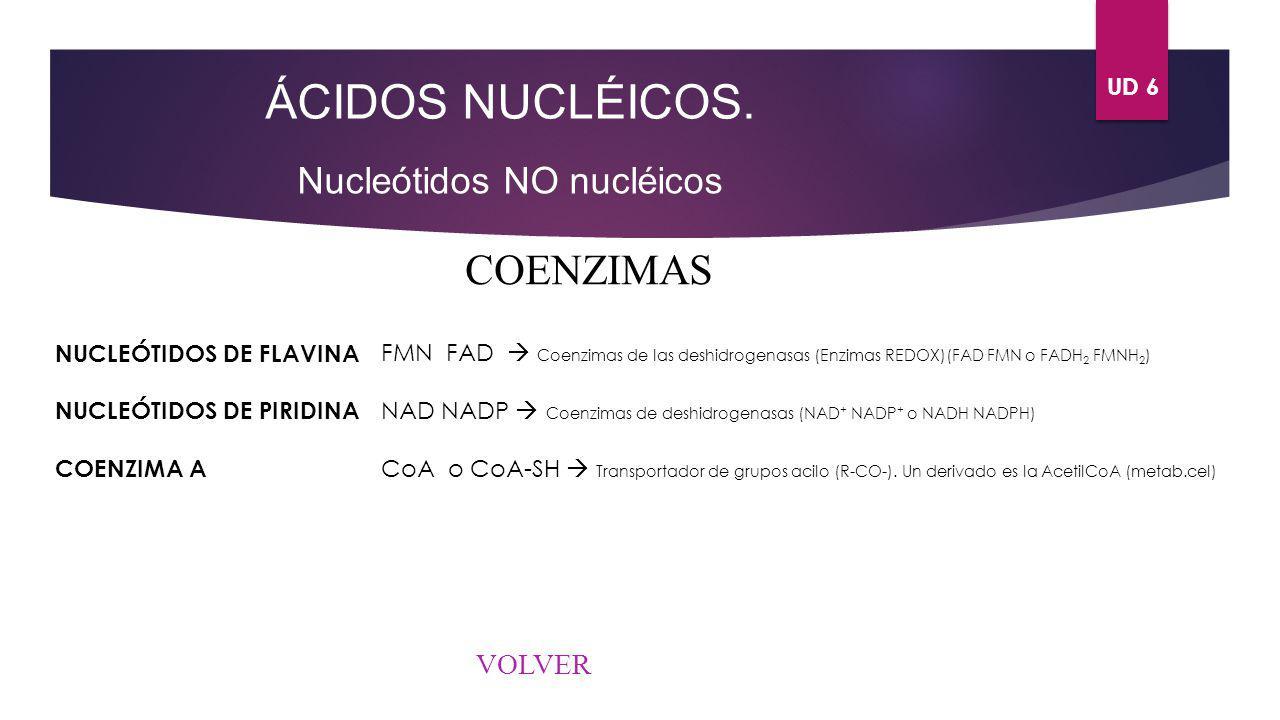ÁCIDOS NUCLÉICOS. COENZIMAS Nucleótidos NO nucléicos VOLVER UD 6