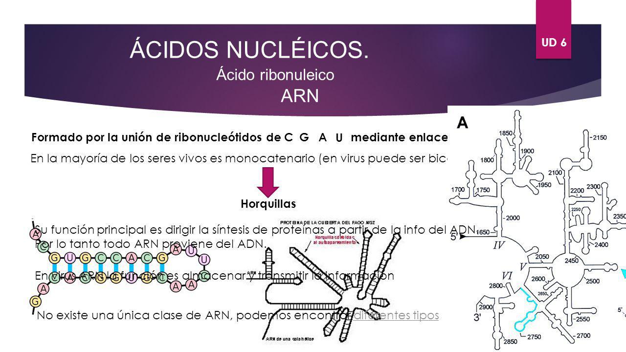 ÁCIDOS NUCLÉICOS. ARN Ácido ribonuleico UD 6