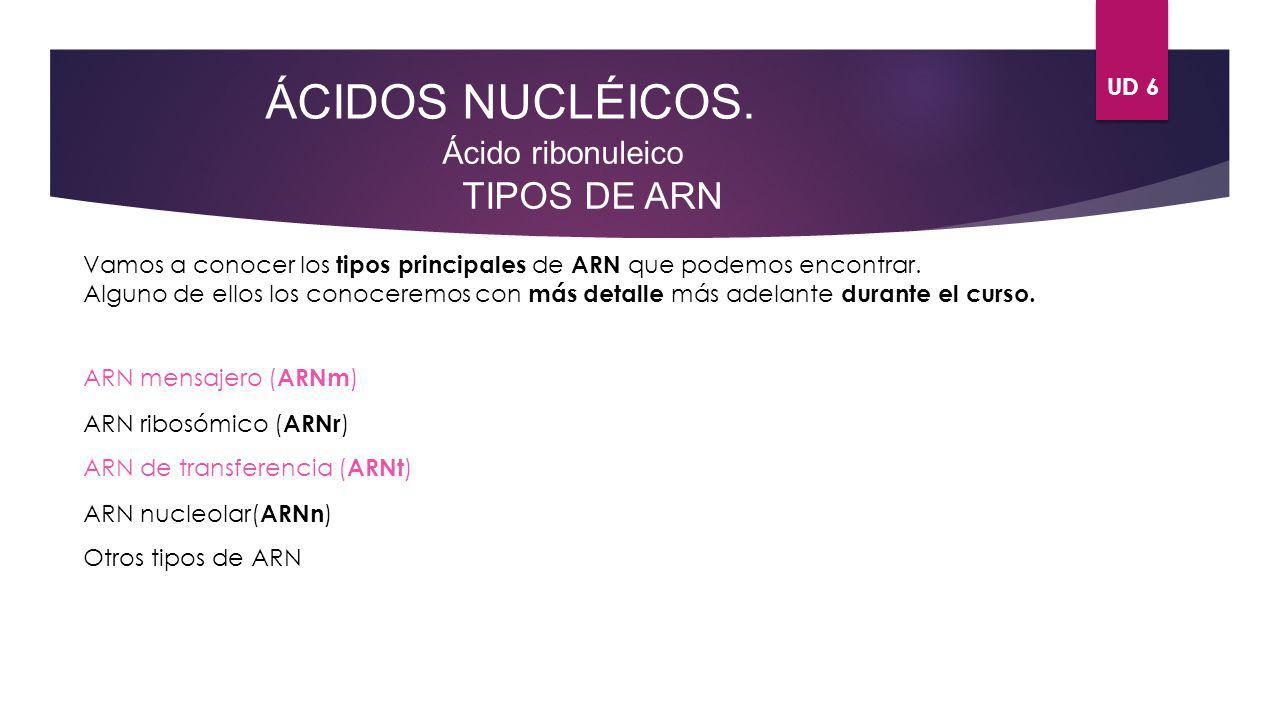 ÁCIDOS NUCLÉICOS. TIPOS DE ARN Ácido ribonuleico UD 6