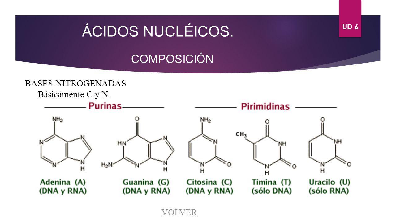ÁCIDOS NUCLÉICOS. COMPOSICIÓN BASES NITROGENADAS Básicamente C y N.