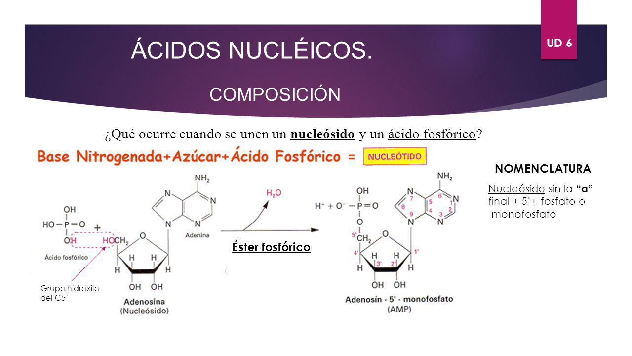ÁCIDOS NUCLÉICOS. COMPOSICIÓN