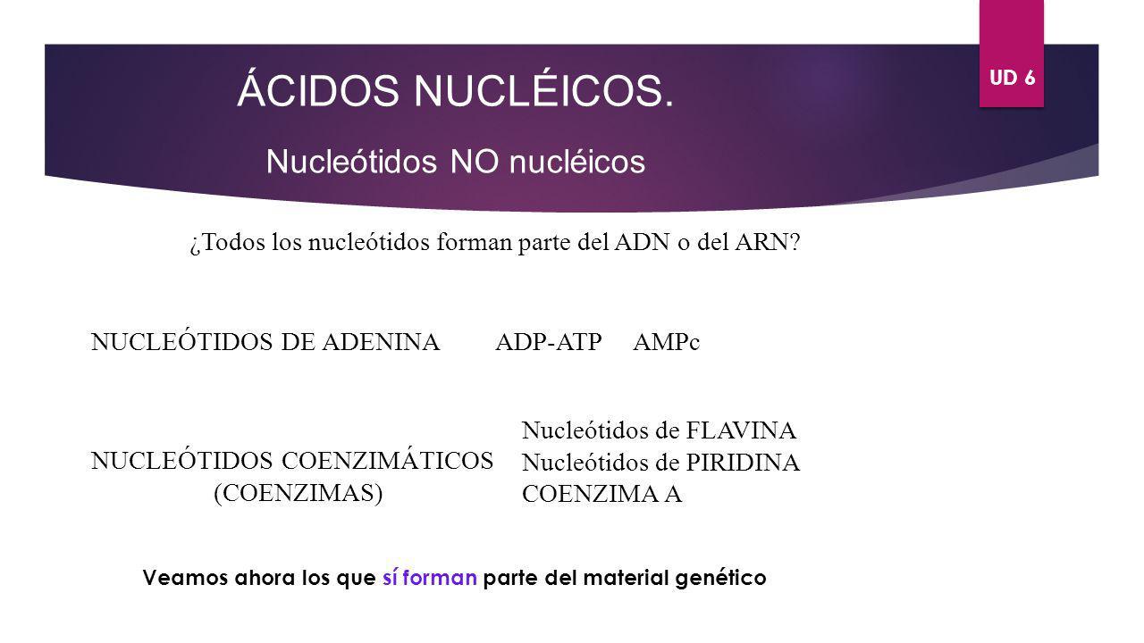 ÁCIDOS NUCLÉICOS. Nucleótidos NO nucléicos