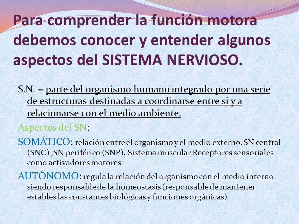 Para comprender la función motora debemos conocer y entender algunos aspectos del SISTEMA NERVIOSO.