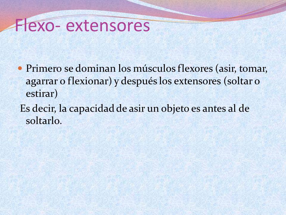Flexo- extensores Primero se dominan los músculos flexores (asir, tomar, agarrar o flexionar) y después los extensores (soltar o estirar)