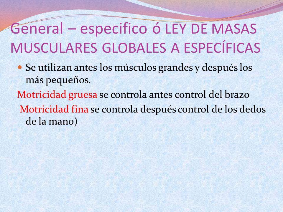 General – especifico ó LEY DE MASAS MUSCULARES GLOBALES A ESPECÍFICAS