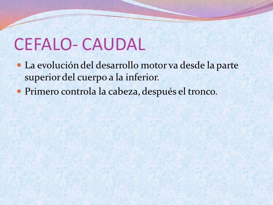 CEFALO- CAUDAL La evolución del desarrollo motor va desde la parte superior del cuerpo a la inferior.