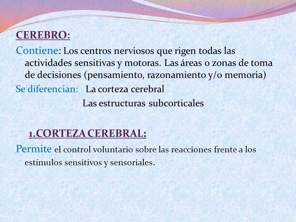 CEREBRO: