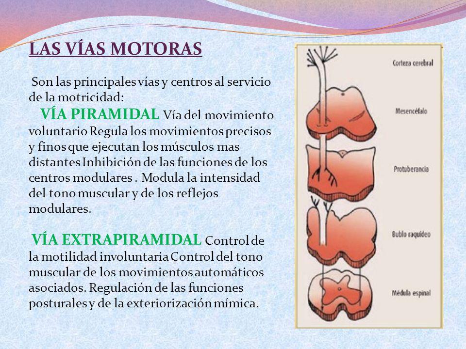 LAS VÍAS MOTORAS Son las principales vías y centros al servicio de la motricidad: