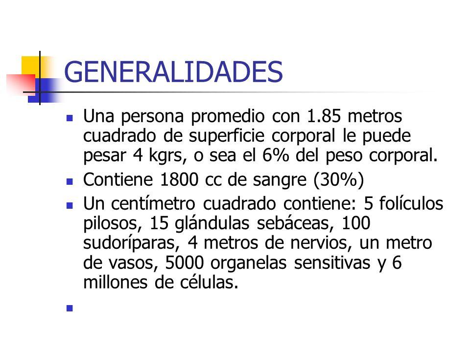 GENERALIDADES Una persona promedio con 1.85 metros cuadrado de superficie corporal le puede pesar 4 kgrs, o sea el 6% del peso corporal.