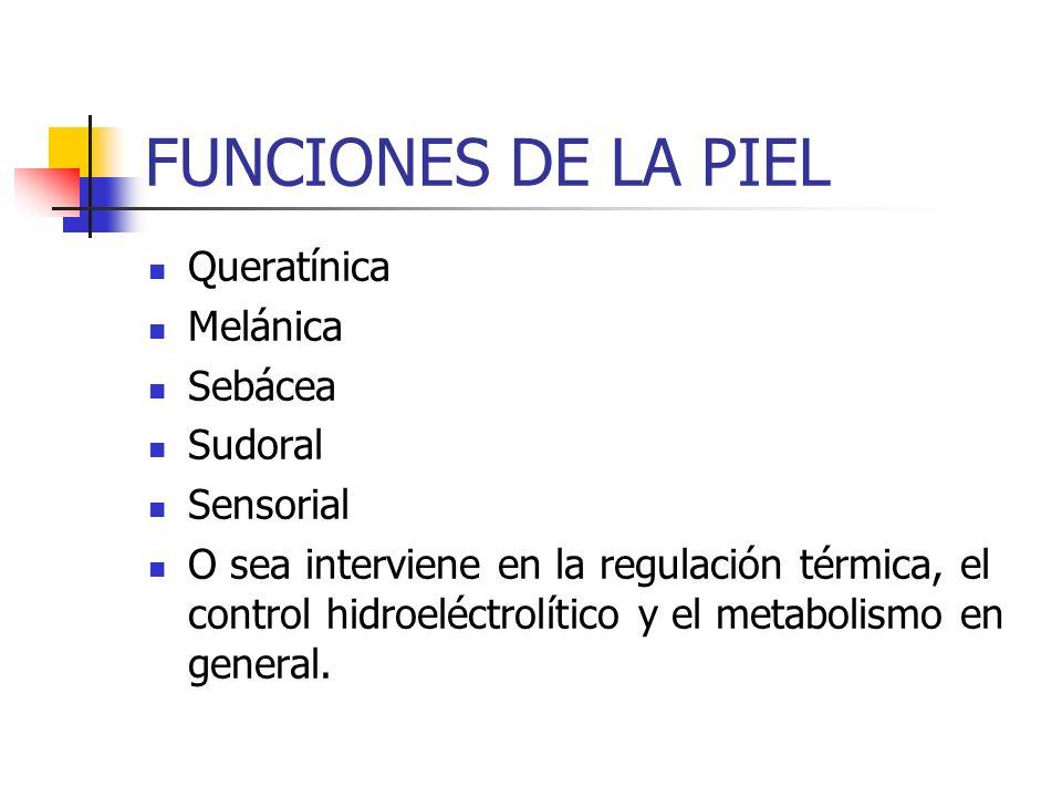 FUNCIONES DE LA PIEL Queratínica Melánica Sebácea Sudoral Sensorial