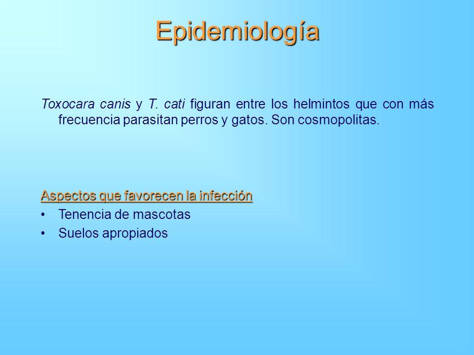 Epidemiología Toxocara canis y T. cati figuran entre los helmintos que con más frecuencia parasitan perros y gatos. Son cosmopolitas.