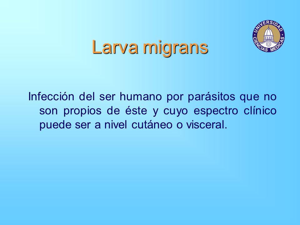 Larva migrans Infección del ser humano por parásitos que no son propios de éste y cuyo espectro clínico puede ser a nivel cutáneo o visceral.