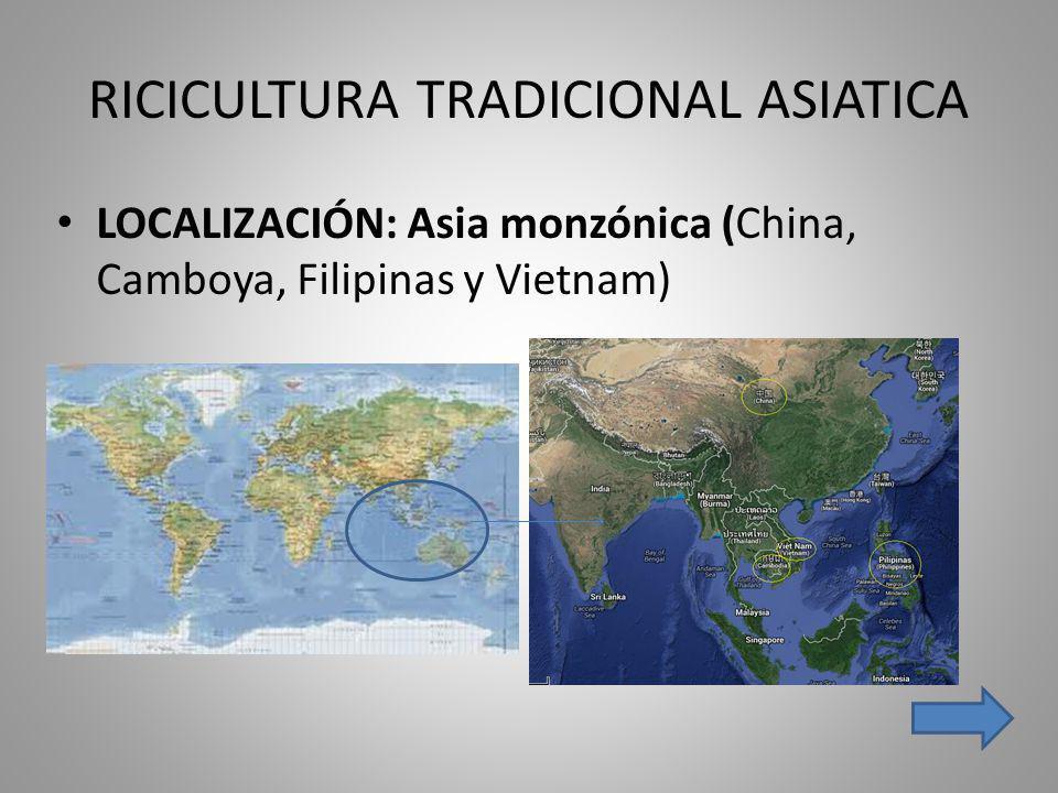 RICICULTURA TRADICIONAL ASIATICA