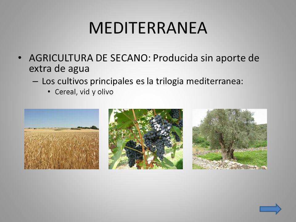 MEDITERRANEA AGRICULTURA DE SECANO: Producida sin aporte de extra de agua. Los cultivos principales es la trilogia mediterranea: