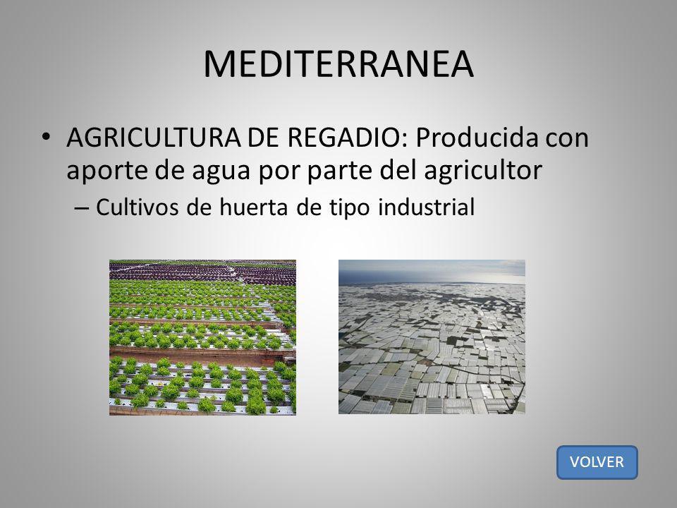 MEDITERRANEA AGRICULTURA DE REGADIO: Producida con aporte de agua por parte del agricultor. Cultivos de huerta de tipo industrial.